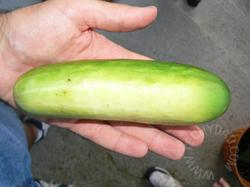 The Surprise Cucumber!