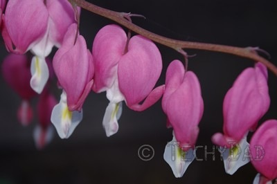 heart-flowers-close-up