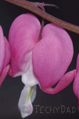 heart-flowers-closer-up