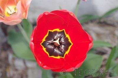 red-flower