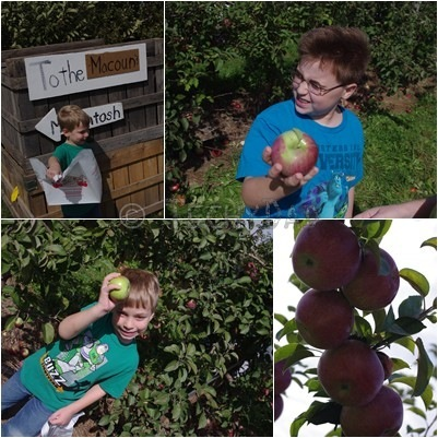 apple-picking1