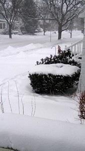 frozen-winter