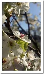 2012-04-03_17-18-49_393