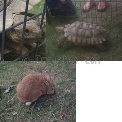 bunny_turtle