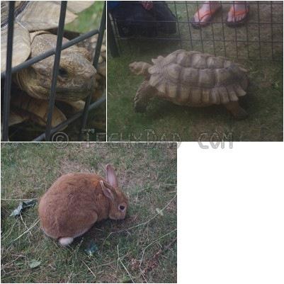 bunny_turtle