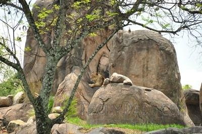 trek-lion2