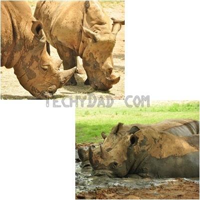 trek-rhino