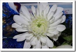 Third Flower Macro