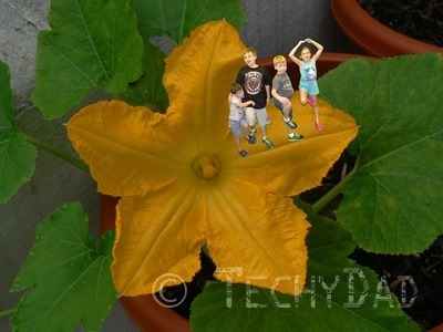 Kids On A Flower