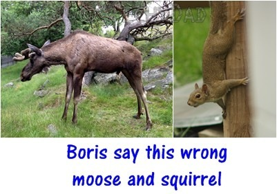 moose_and_squirrel