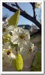 2012-04-03_17-19-31_126