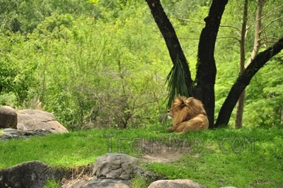 trek-lion