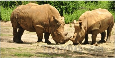 trek-rhino2