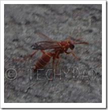 lucky-bug
